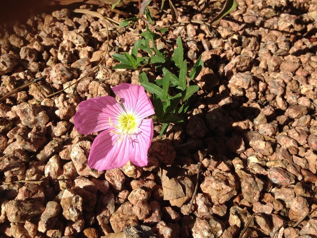 Resilience Fleur